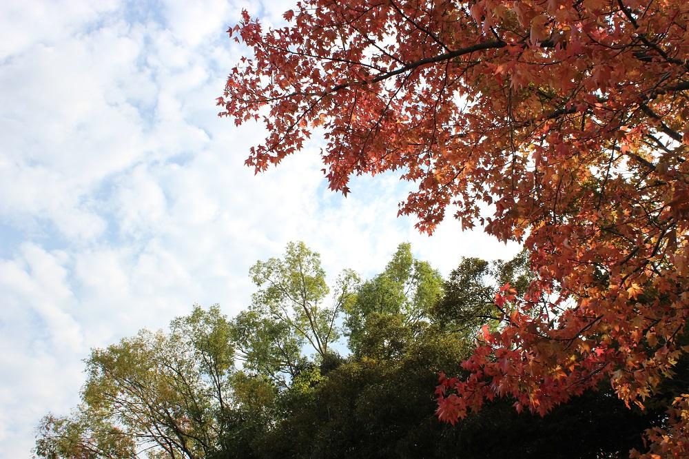木をメインにカメラのオート機能で適正露出にした写真