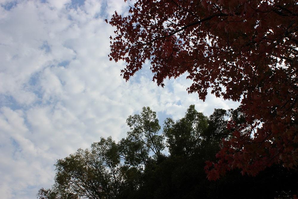 空をメインにカメラのオート機能で適正露出にした写真